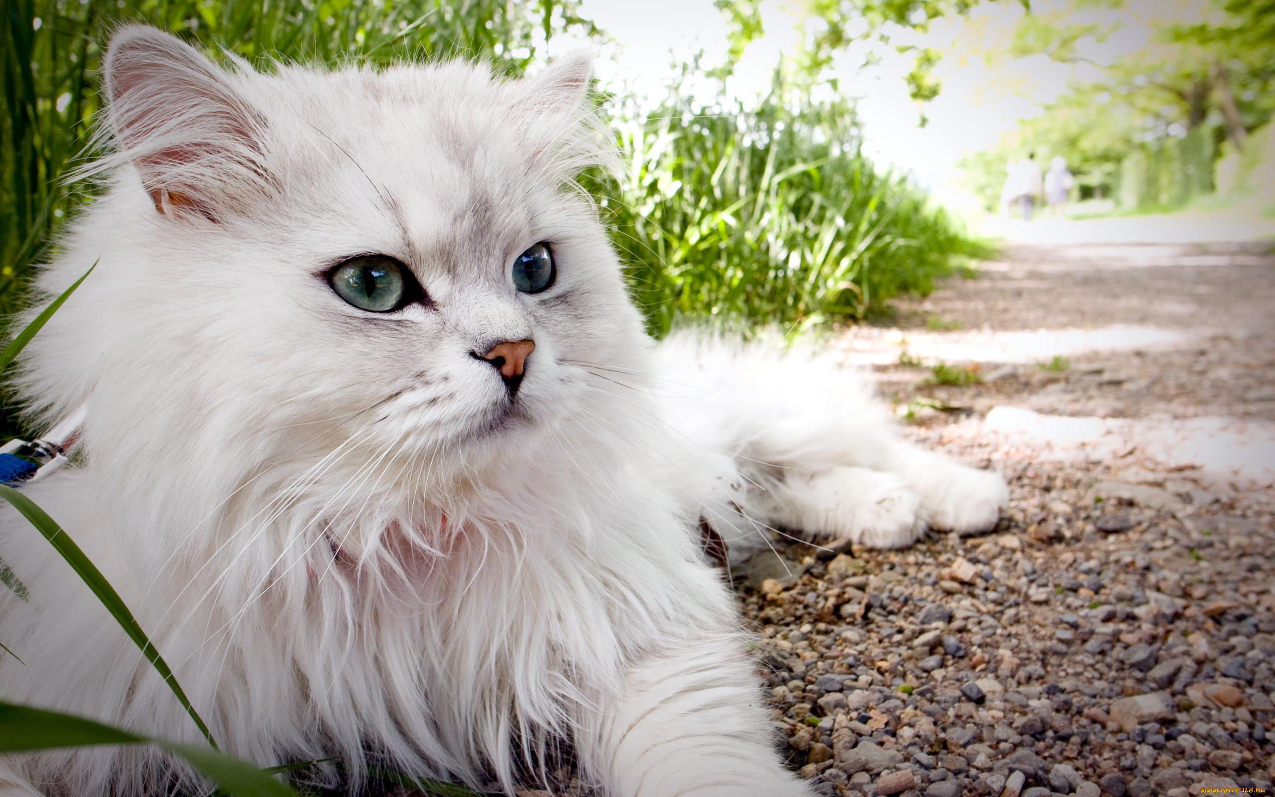 Очень красивые коты фото